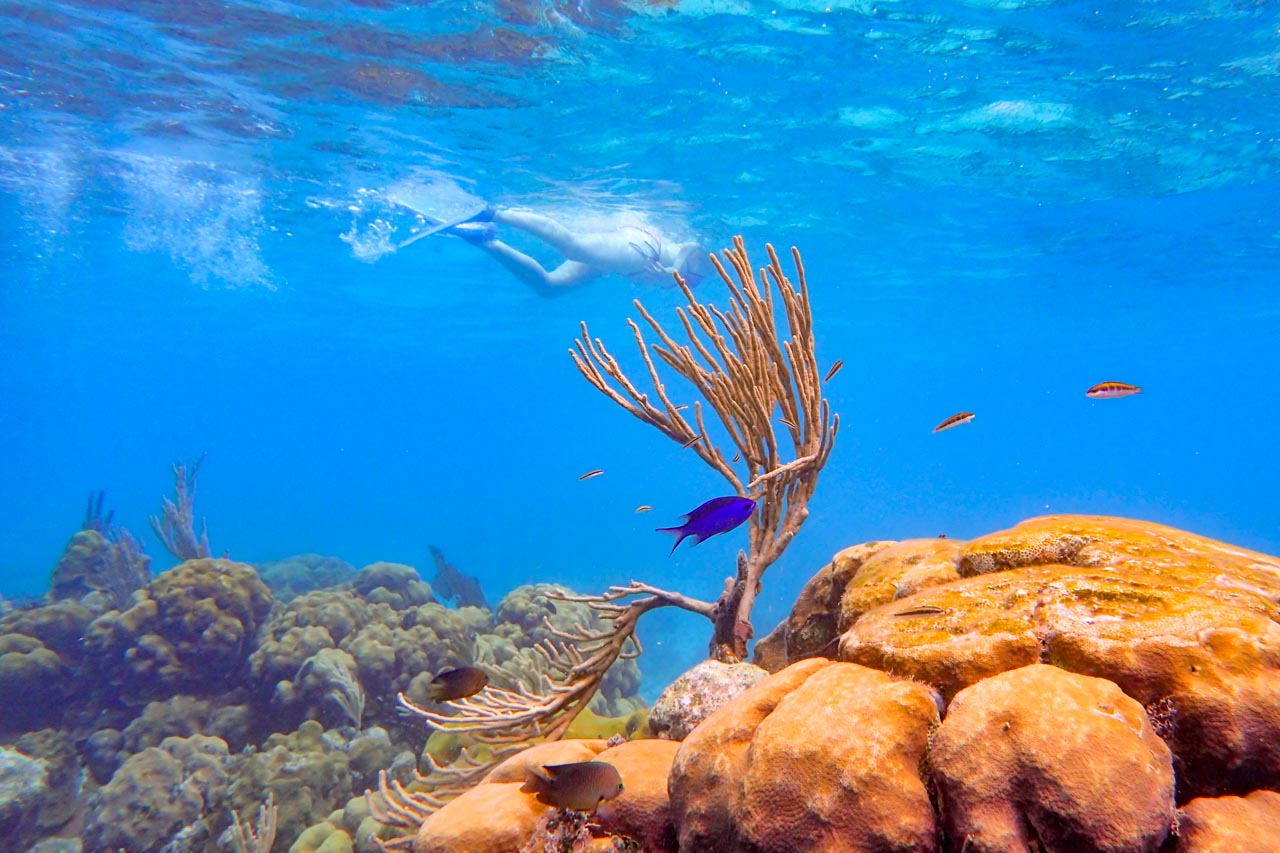 Woman snorkelling in background behind coral and tropical fish