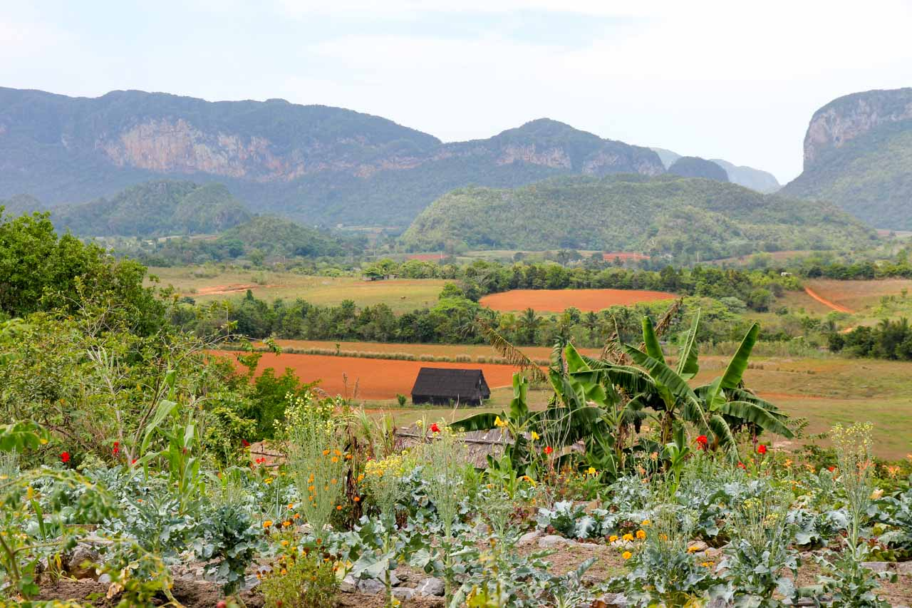 Vinales Valley view with red soil farms and lush vegetation