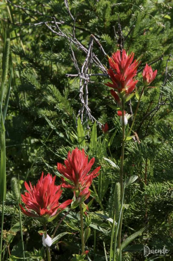 Red paintbrushes