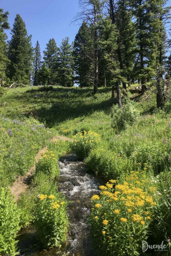 Wildflower lined paths around Trout Lake
