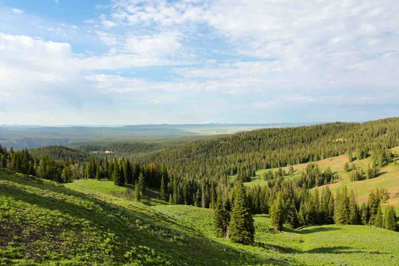 Pine forests and open grasslands viewed form above with partly cloudy sky