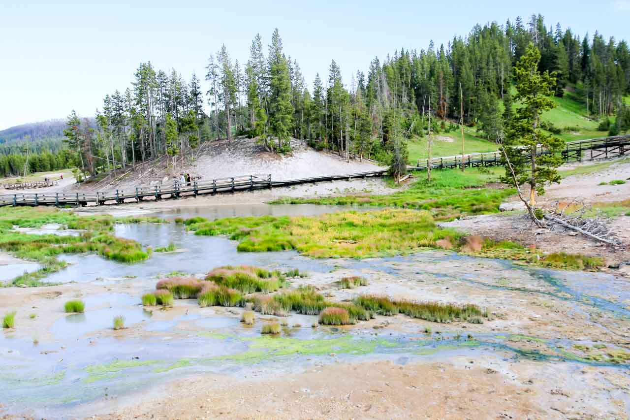 Colourful mudpots and vegetation with boardwalk and pine trees in background