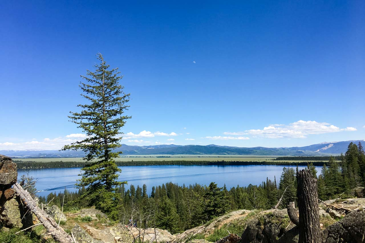 Photo of Lake with pine tree in foreground and mountains in the distance