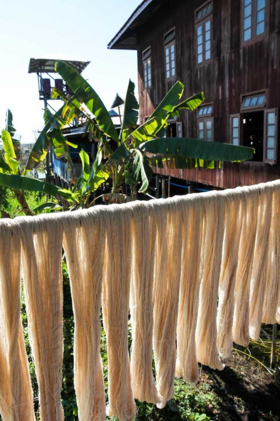 Lotus thread spun, washed and hung out to dry with banana trees in background