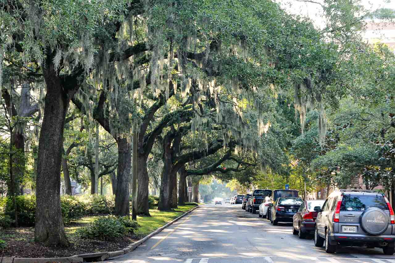 Oak-lined streets hanging with Spanish Moss