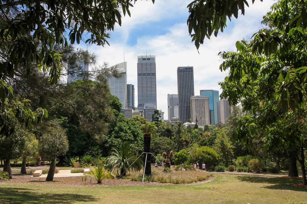 Sydney skyline viewed from the Royal Botanic Gardens