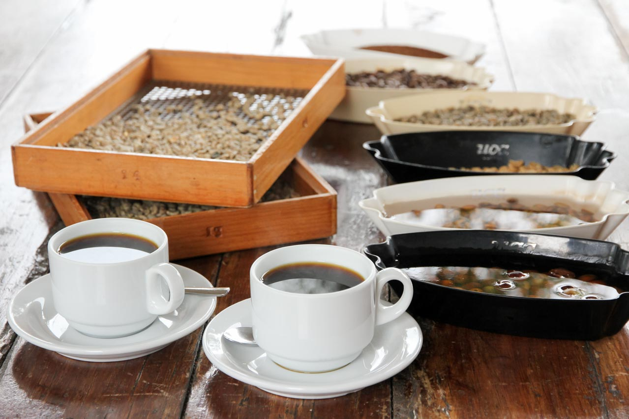 Coffee beans at different stages of processing with two freshly brewed cups of coffee in white coffee cups and saucers.