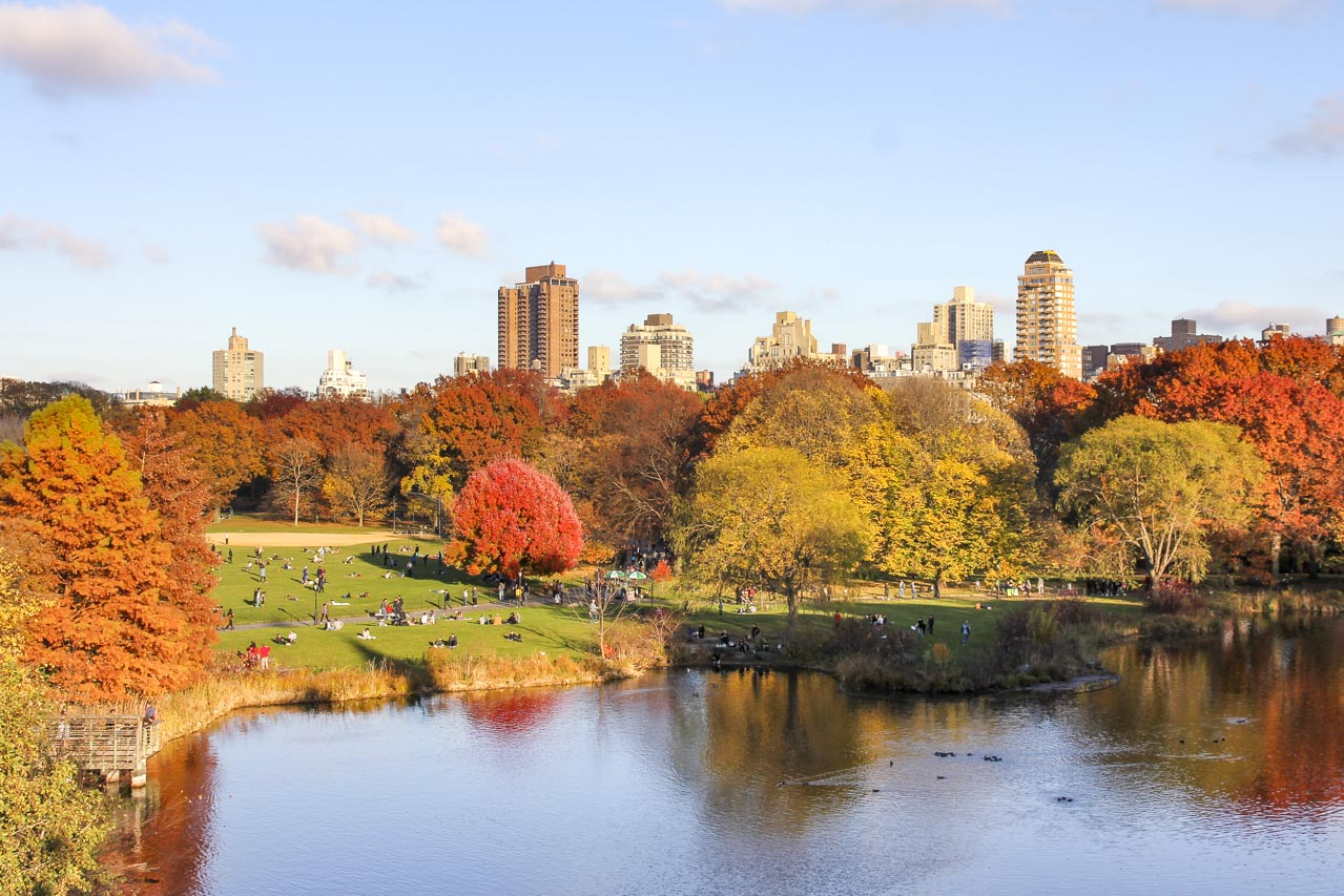 Autumn colour in Central Park