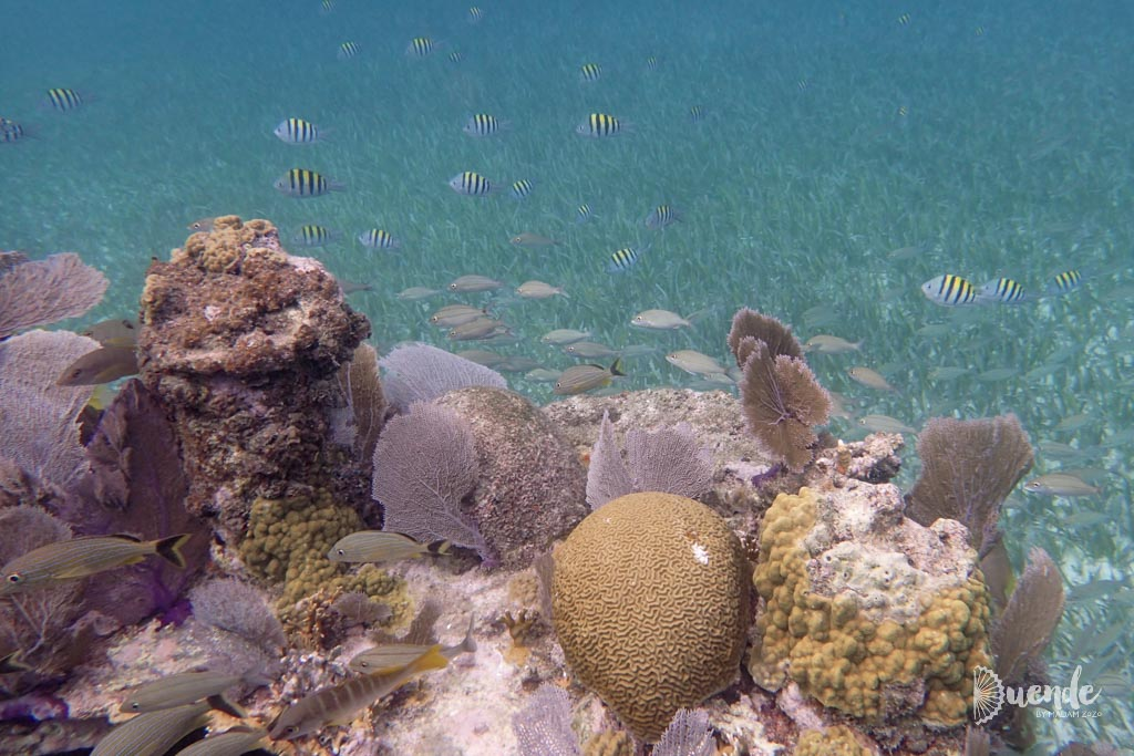 Coral growing on the edge of the shipwreck