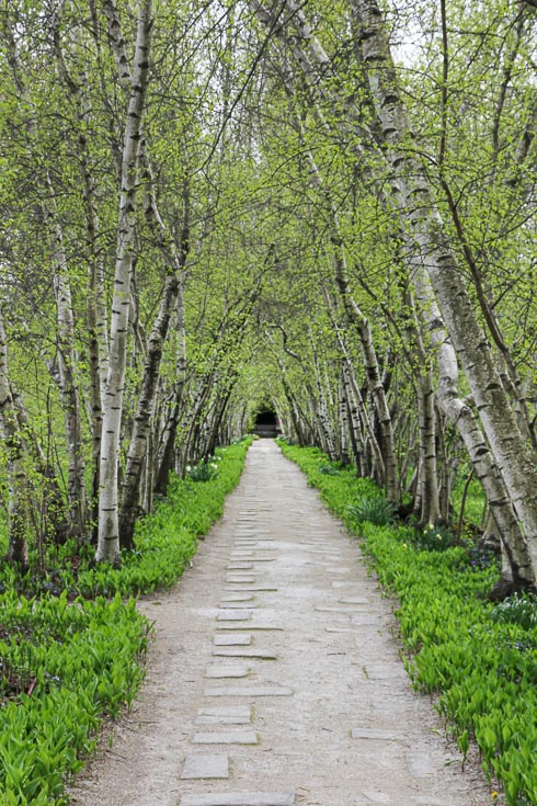 Image of path framed with rows of birch trees