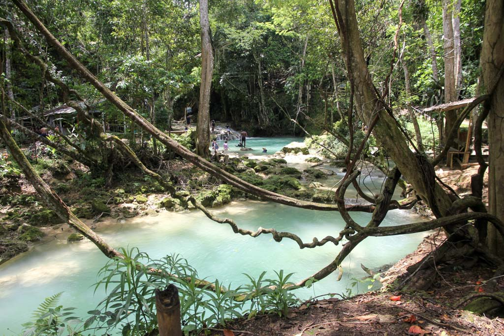 Turquoise water holes in the jungle with vines in foreground