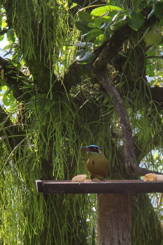 Bird with green body and black and blue head, sitting on bird feeder with tree in background