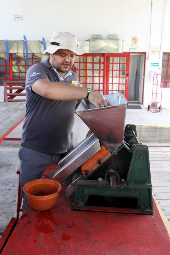 Man demonstrating method for grading coffee