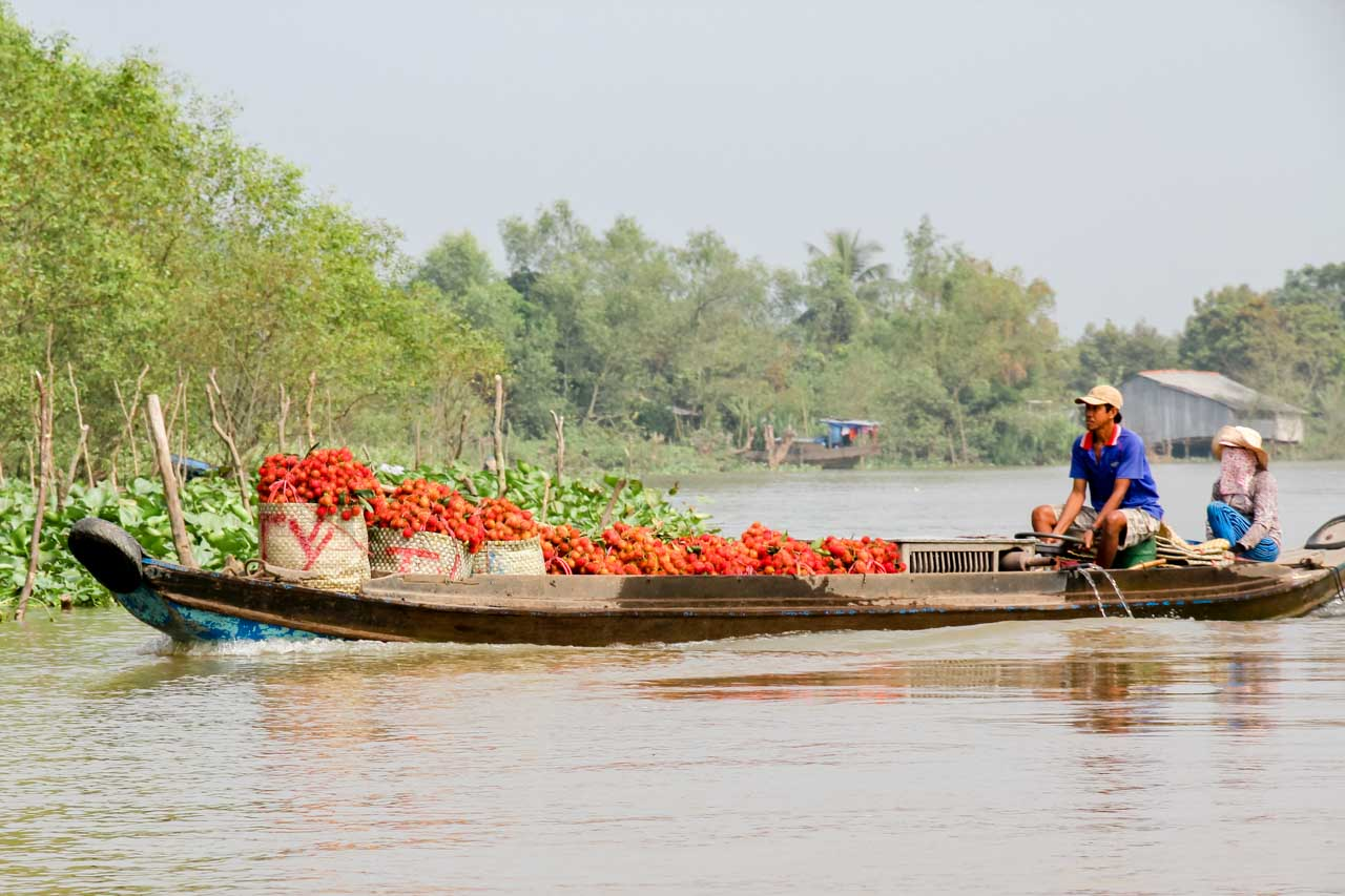Long boat full of rambutan being transported from farm to market
