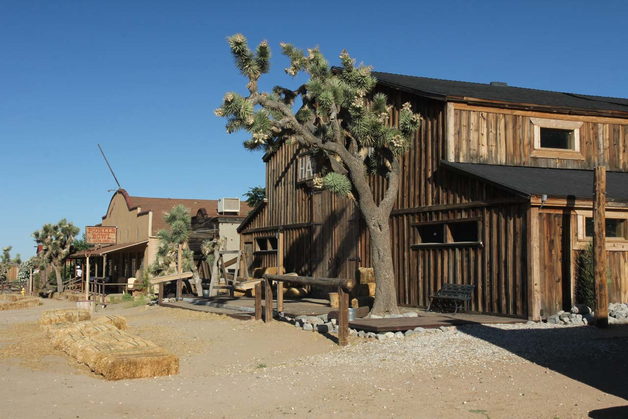 Old West style buildings with large Joshua Tree