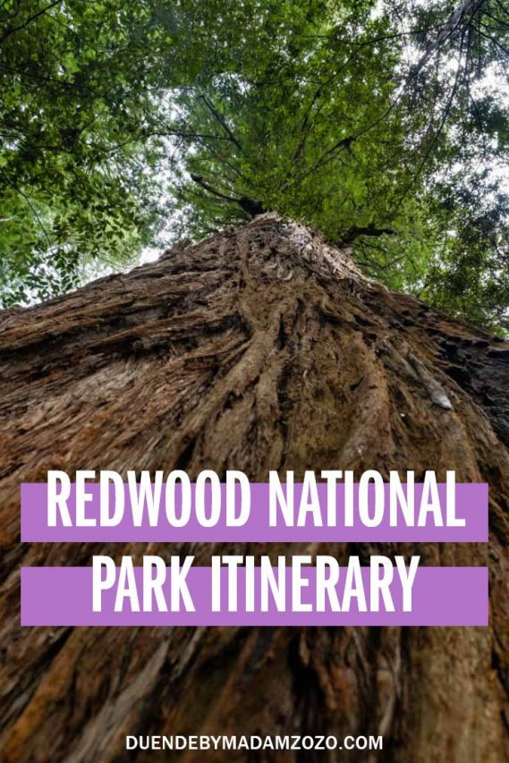 """Photo of Redwood tree, looking up the trunk towards canopy with text """"Redwood National Park Itinerary"""""""