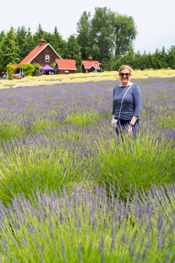 Woman standing amongst lavender bushes with wooden building in background