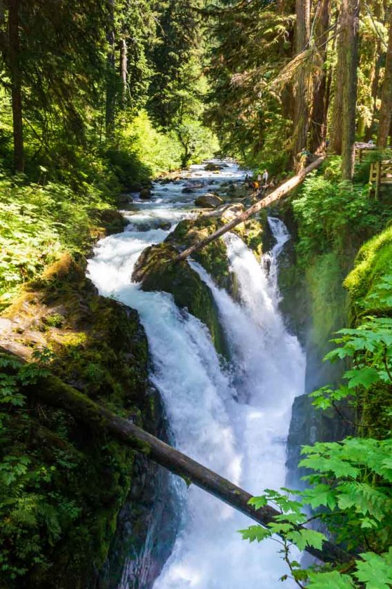 Photo of split stream waterfall surrounded by lush forest